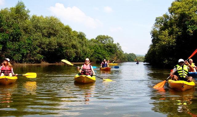 kayaking-in-the-goan-backwaters