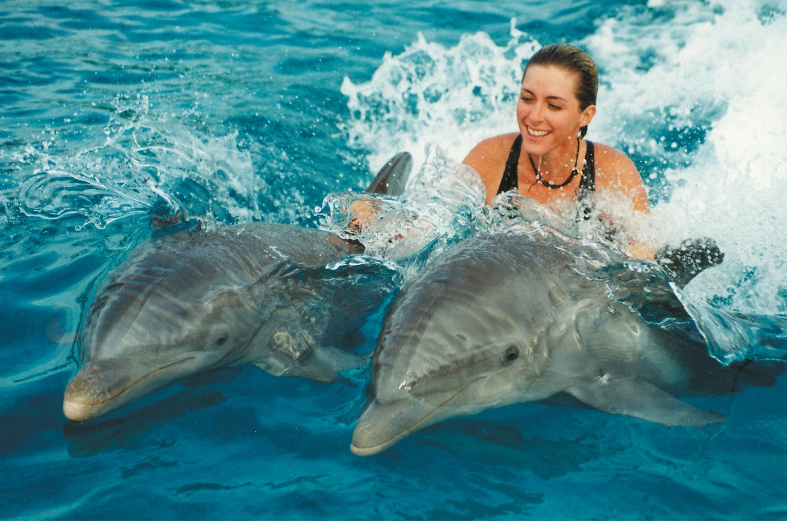 playing-with-dolphins-in-goa
