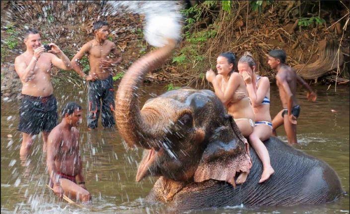 elephant-splash-goa