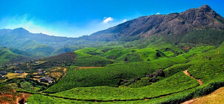 kerala-tea-valley