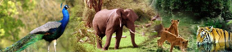 wildlife india kerla