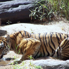 5 Nights 6 Days Private Agra Jaipur and Ranthambore Tour package.