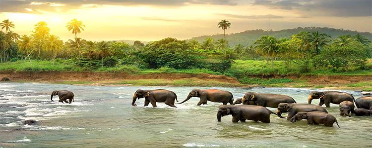 Adventurous Wildlife Locations