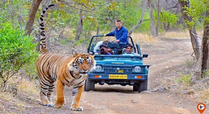 ranthambore national park safari