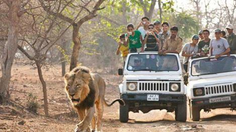 Bannerghatta National Park lion safari