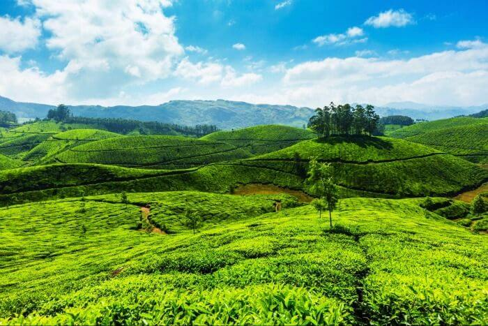 Hill Stations in Kerala indiator