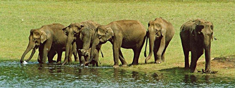 Periyar Wildlife Kerala