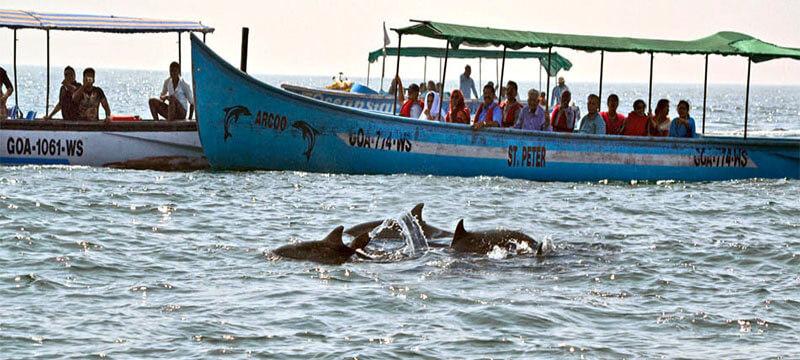 Spot Dolphins Goa