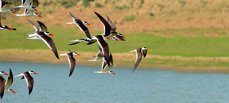 National Chambal Wildlife Sanctuary, U