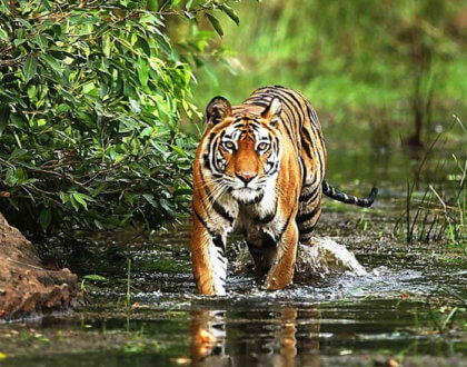 India's 10 Best National Park Tours for Wildlife Safari