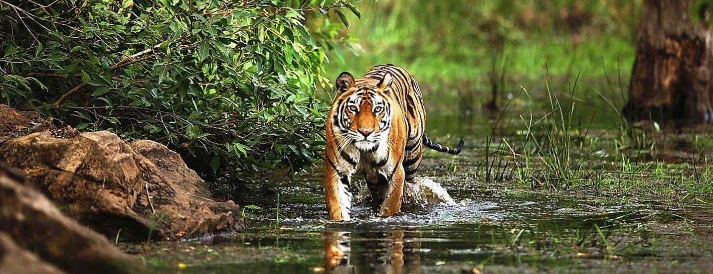 India's 10 Best National Park Tours for Wildlife Safari