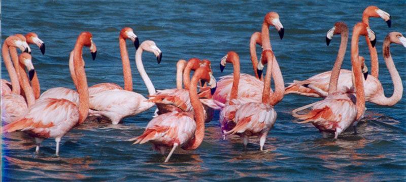 Nalsarovar Bird Sanctuary, Ahmedabad